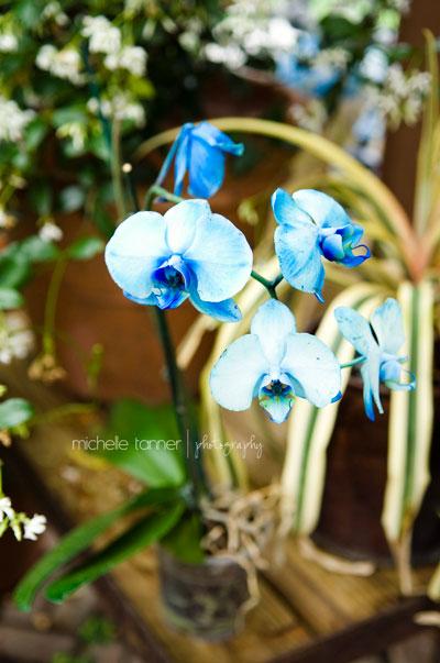 MN Landscape Arboretum Flower